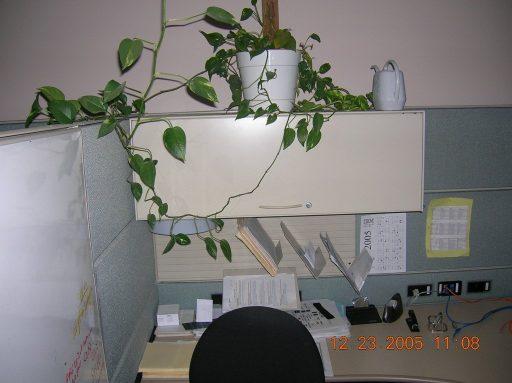 A Corporate America cubicle