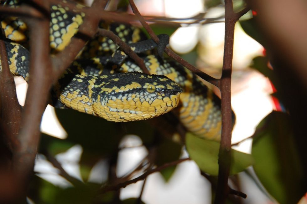 Travel stress: a snake in a tree